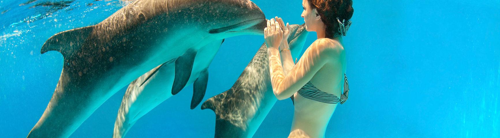 7 мест по всему миру, где мы можем плавать с дельфинами